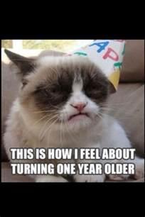 grumpy cat birthday grumpy cat i this cat