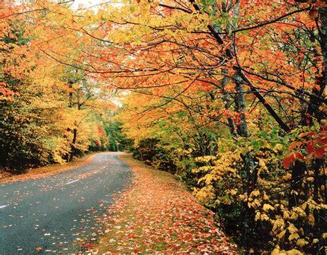 fall colors best maine fall foliage