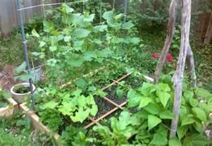 Gardening Green Beans How To Grow Green Beans Gardening Ideas