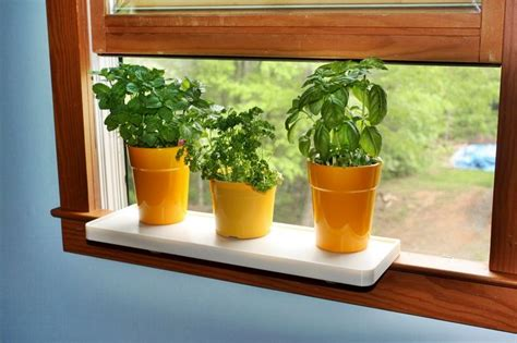 Inside Window Sill Plant Shelf 17 Best Images About Plant One On Us Photos On