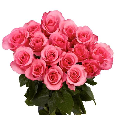 Fresh Flower Delivery by Globalrose 100 Pink Roses Fresh Flower Delivery Pink Roses