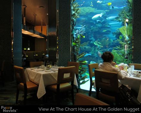 Aquarium Dining Table Looking At Aquarium From Dining Table At Chart House In Las Vegas Fuzzy Navels