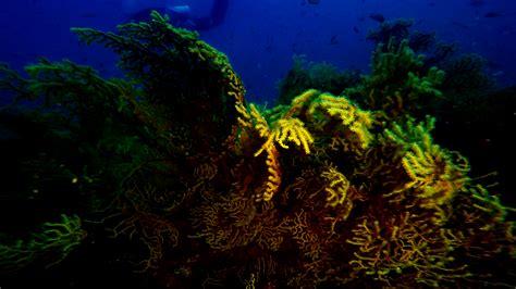 faro giardino faro gallipoli giardino gorgonie underwatertales