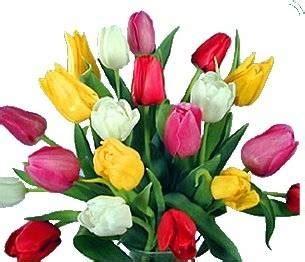 dillo con i fiori dillo con un fiore consigli pratici