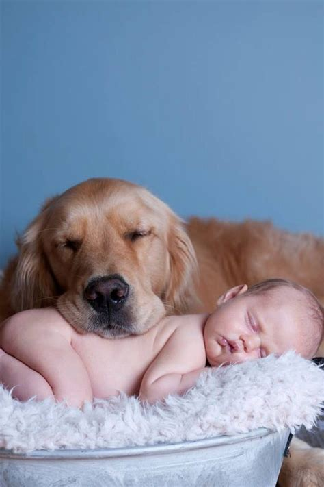 golden retriever newborn golden retriever and baby kiddos