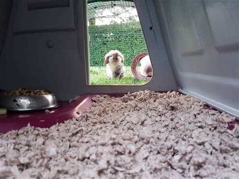 gerbil bedding carefresh animal bedding 14l natural hamster gerbil