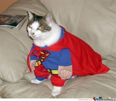 Supercat Kitten 800gr i am supercat memes best collection of i am supercat pictures