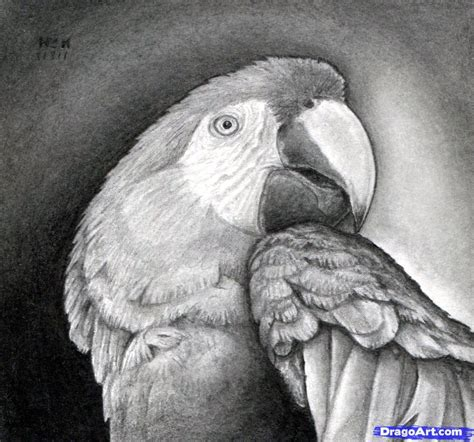 how to draw a realistic how to draw a realistic parrot scarlet macaw step by step birds animals free