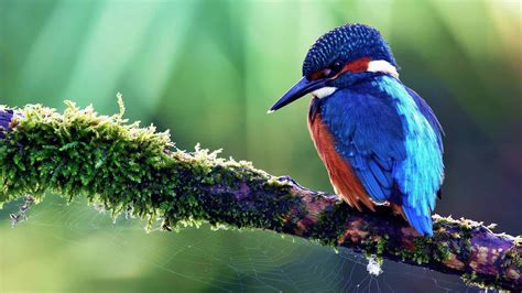 bird wall paper wallpapers birds of paradise wallpaper cave