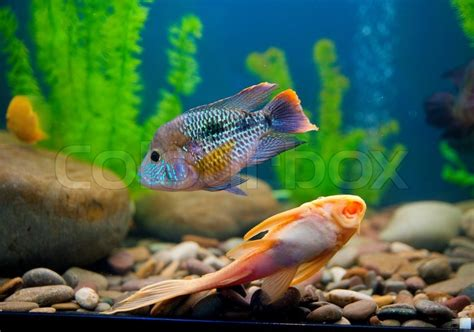 colorful saltwater fish colorful fish in aquarium saltwater world stock photo