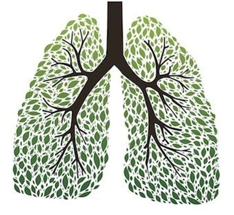 What Herb Detoxs The From X Rays by The 9 Best Herbs For Lung Cleansing And Respiratory