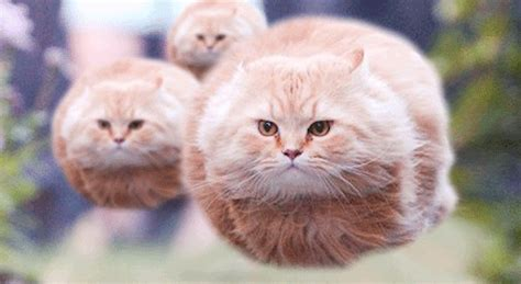 7 best images about we 7 best cat gifs of the week 12th september 2015