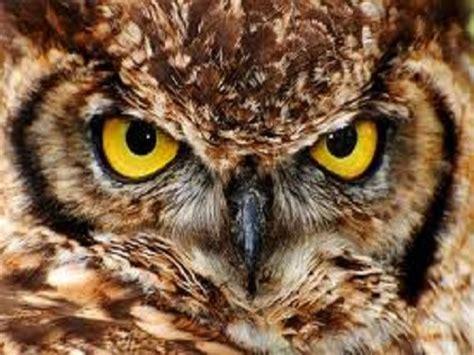burung hantu mitos atau fakta misteri aneh di dunia