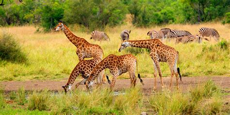 Address Search South Africa Image South Safari