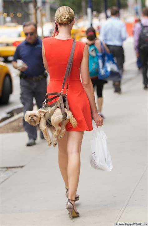 dog purse     polarizing choice  accessory  huffpost