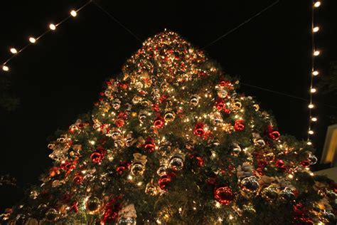 100 feet tall christmas tree