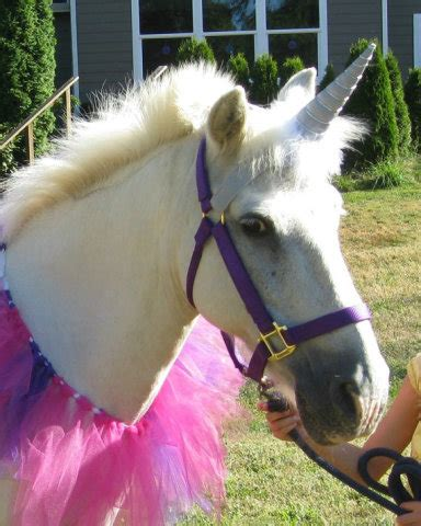 help your horse find its inner unicorn | petslady.com