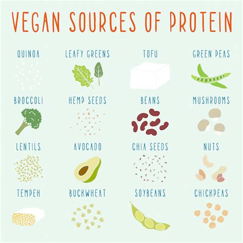 sources of protein 10 protein sources for vegans the food