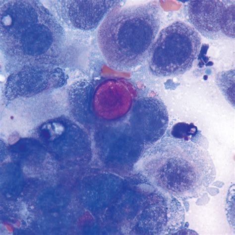 transitional cell carcinoma in dogs canine transitional cell carcinoma clinician s brief