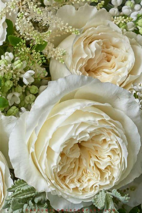 david austin wedding rose patience parfum flower company