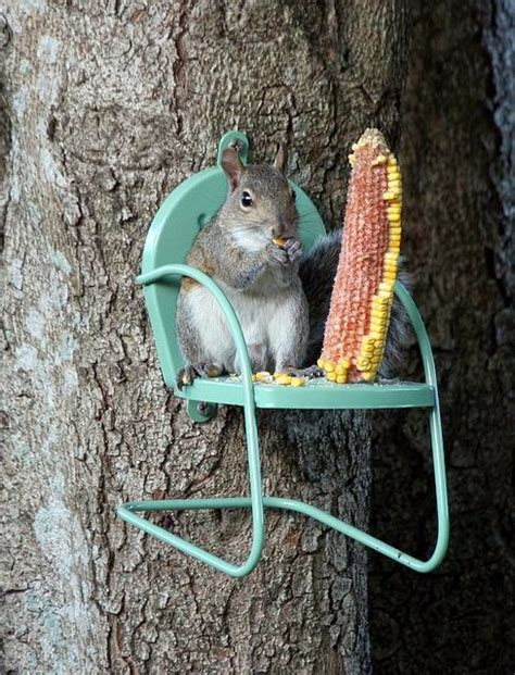 Squirrel Feeder Chair diy squirrel feeder weekend yard work series