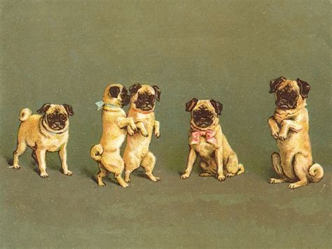 pug groups pug of dogs lovely dogs artwork and extras pintere
