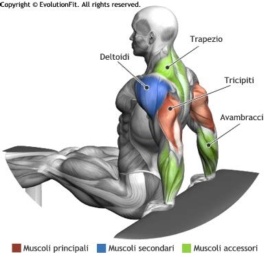 What Muscles Does Bench Press Work Evolutionfit Flessioni 2 Panche
