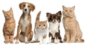 Small Animals Free To Home Driggs Veterinary Clinic Veterinarian In Driggs Id Usa