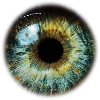 eye+lenses+hd+png_eye+4.png (320×320) | 4 d studio