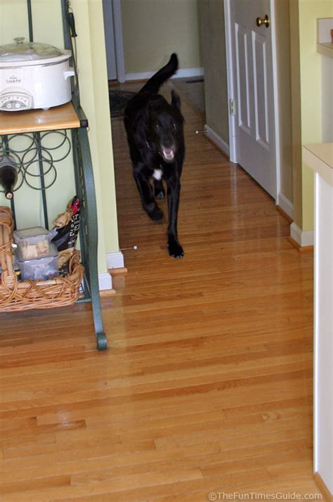 tips for dog owners with hardwood floors the log home guide