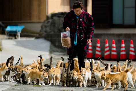 aoshima cat island est100 一些攝影 some photos cats crowd the harbor clowder