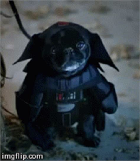 pug darth vader costume happy 13 pet costumes lessonly