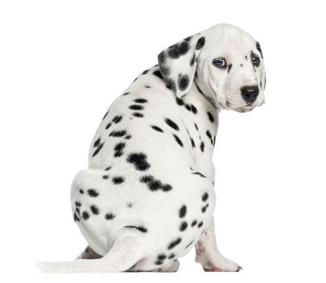 italian puppy names italian names and italian puppy names