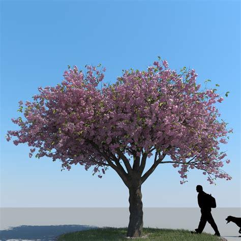 cherry blossom tree 3d model free 3d model realistic cherry tree