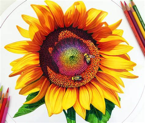 colors of sunflowers davidson drawing artist gallery large inked one