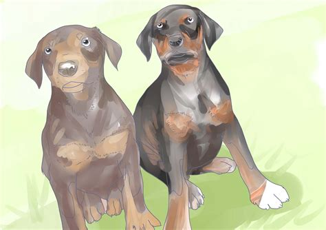 buy doberman puppy how to buy a doberman pinscher puppy 5 steps with pictures