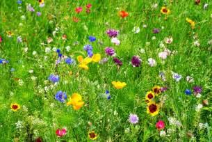 come prendere i fiori di bach expo cania