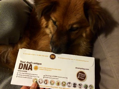 8 Doggies Id To Meet by Dna My Breed Identification Test Kit Chewy