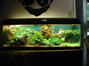 Marvellous Modern Fish Tank Pics Design Inspiration   Golime.co