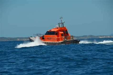 boat cruise queenscliff pilot boat peels off to port picture of south bay eco