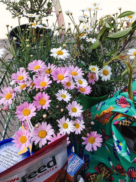 Flower Power Garden Centre Terrey Hills Sydney Flower Power Garden Centre