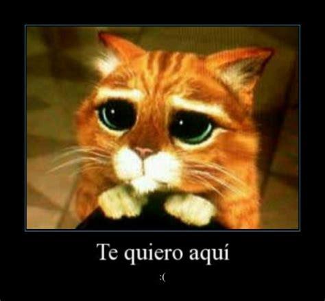 imagenes te amo ojitos imagenes de amor con el gato con botas imagui