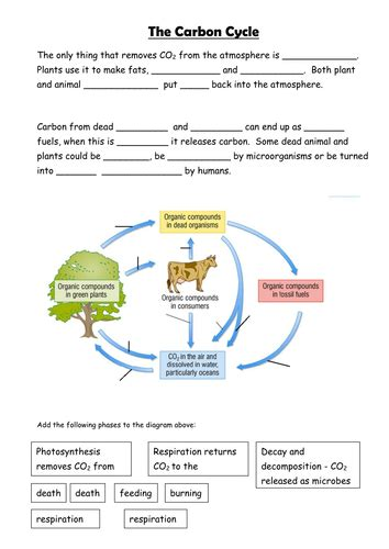Carbon Cycle Worksheet Answers by Carbon Cycle By Sian Jones Teaching Resources Tes