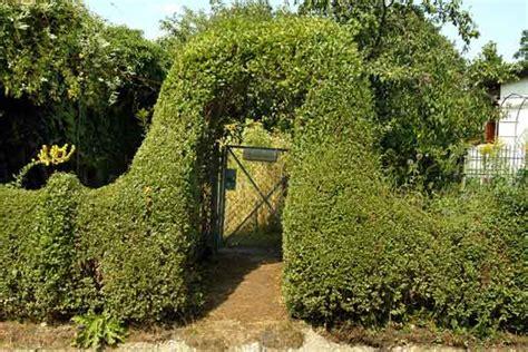 Pflanzen Sichtschutz Terrasse 920 by Liguster Pflegeleichte Heckenpflanzen 1
