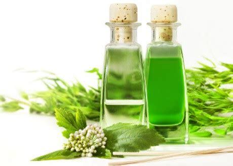 Daun Minyak Kayu Putih 11 manfaat minyak kayu putih untuk kesehatan cintamela