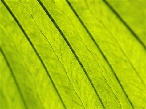 imagenes para fondo de pantalla color verde plantas fondos de color verde hoja 12 fondo de pantalla