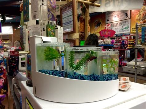 pet stores near me that sell puppies pet fish food near me tropical pets related keywords suggestions tropical pets