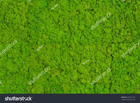 mossy green green moss background mossy texture stock photo 306361556