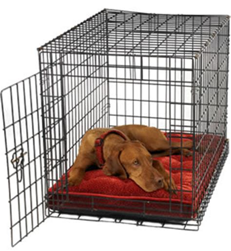crate a puppy while at work tips crate