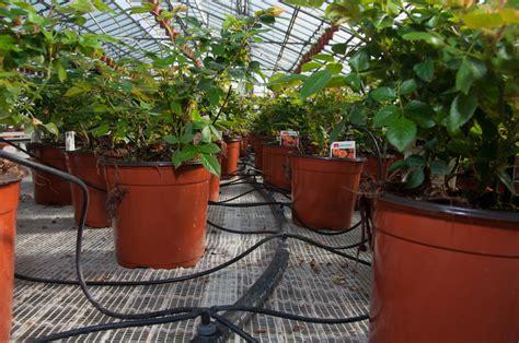 irrigazione vasi irrigazione vasi vacanze